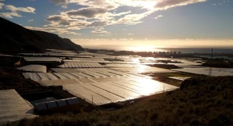 Grüne Helfer zur Eindämmung des Klimawandels: Obst und Gemüseproduktion in EU-Solargewächshäusern