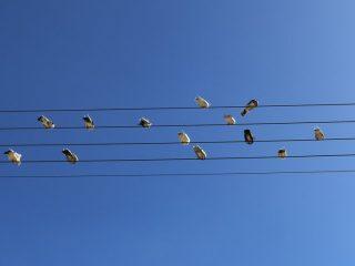 ステキな音色が聴こえてきそう!電線に並んだ小鳥の様子が五線譜みたい