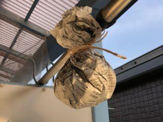 アシナガバチが巣を作ってしまうとお悩みの人へ!ハチが巣を作らないカンタンな方法に注目が集まる