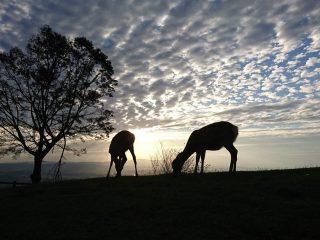 アフリカで撮った写真かと思ったら、奈良県だった