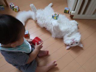 お腹の上にオモチャを乗せてもお構いなし!赤ちゃんと遊んでる猫様の心が広すぎる