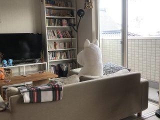 ムーミンがうちに突然やってきた…共にお茶を飲みテレビを見てくつろぐ姿がほのぼのする