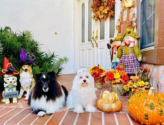 Любимите кучета на д-р Георгиева Айра и Бетина.
