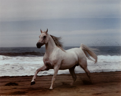 White Horse on Beach Prints by Ron Kimball at AllPosters.com