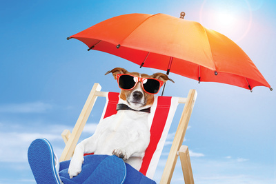 brown and white terrier in red-and-white striped beach chair, with red-framed sunglasses, blue beach towel, and blue flipflops is listening to a music player. He is protected from the sun by an orange umbrella.
