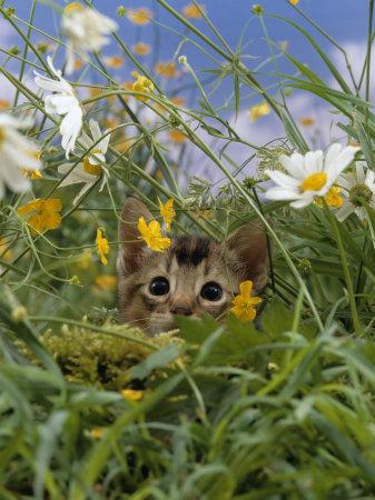 kitten stalking 2