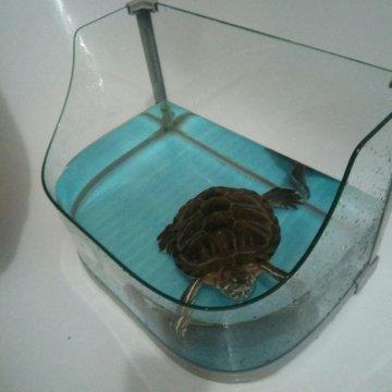Аквариум для черепахи – купить в Москве, цена 200 руб ...