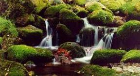 río Muniellos