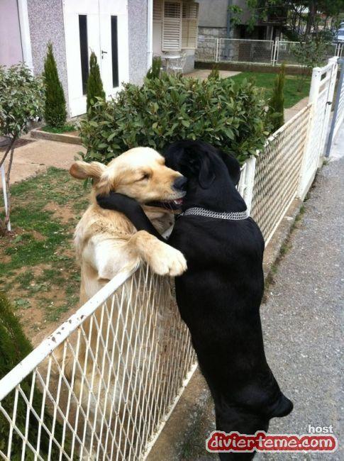 abrazo-de-amigos