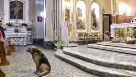 """Sucedió en un pequeño pueblo de Italia. El animal va todos los días al templo para esperar """"el regreso"""" de su ama. Imágenes."""