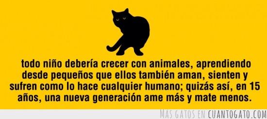 gatoconsejos
