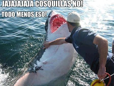 tiburon-jajaja-cosquillas-no-todo-menos-eso-foto-chistosa