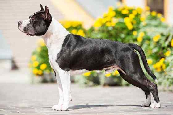 Benefícios do Óleo de Coco para o Pelo do Cachorro