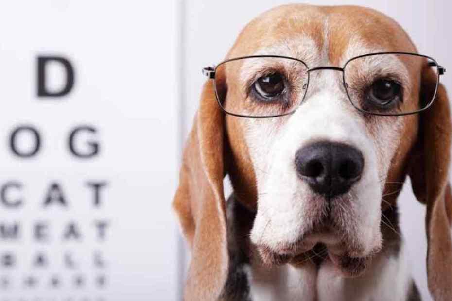 como cachorro enxerga