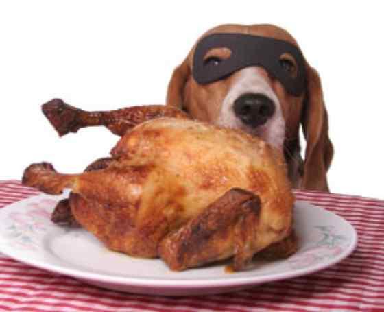 cachorro pode comer osso de frango