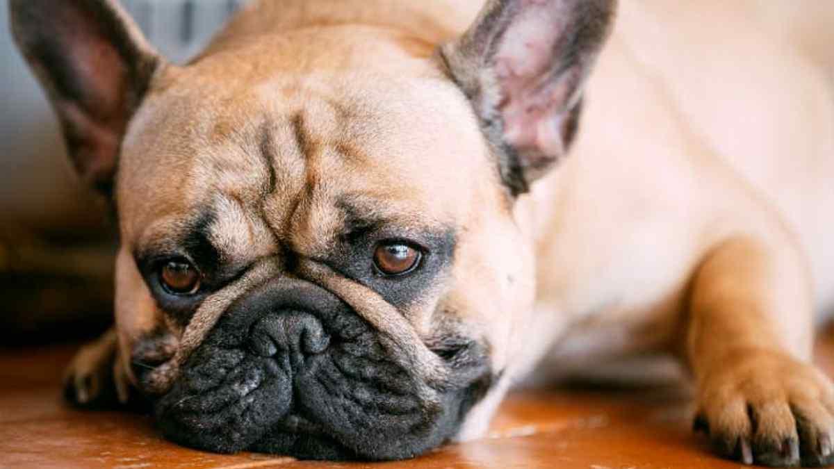 Sintomas de verme em cachorro