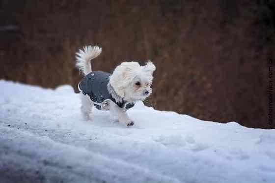 Raças de cachorro pequeno de todo o mundo