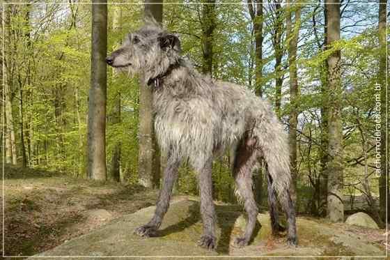 Cachorro de raça grande