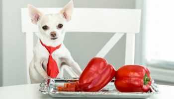 cachorro pode comer pimentão
