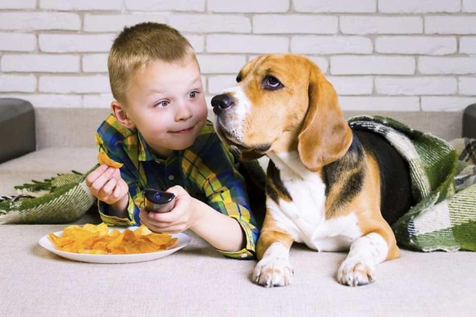cachorro pode comer batata