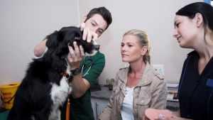 acne canina