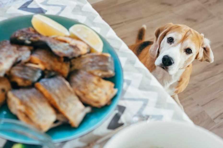 cachorro pode comer peixe
