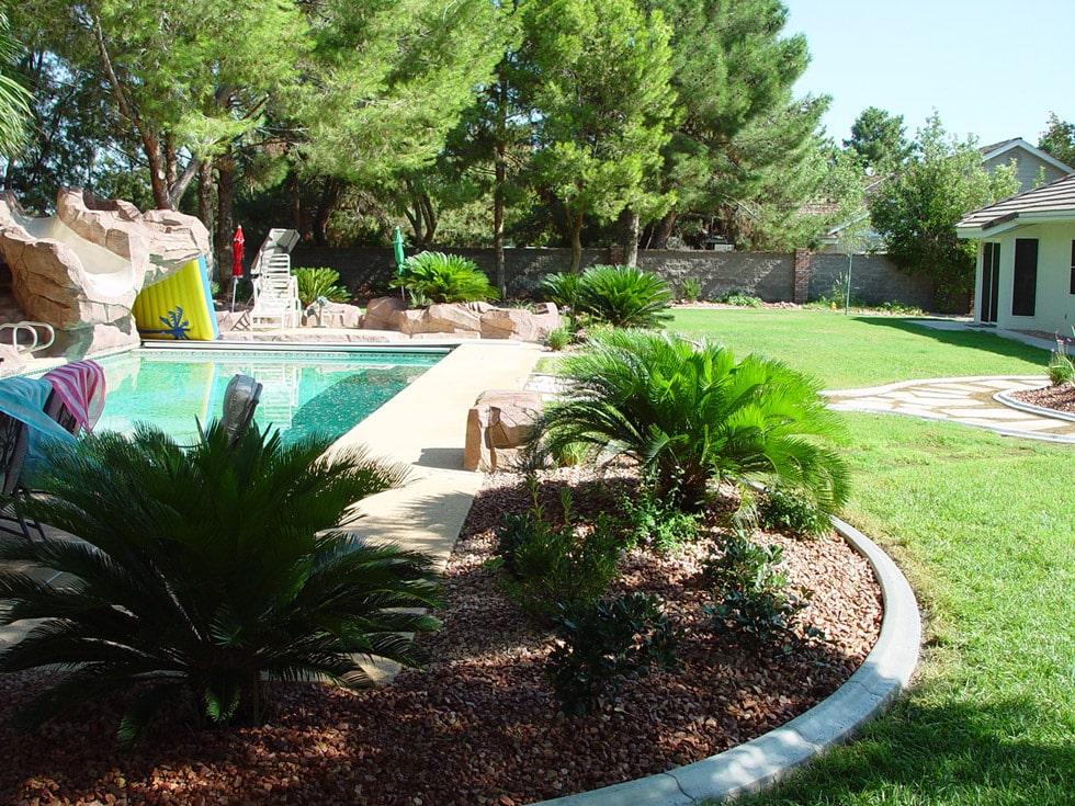 Palm Trees, Flagstone & Additional Tropical Feel - Cacti ... on Palm Tree Backyard Ideas id=50451