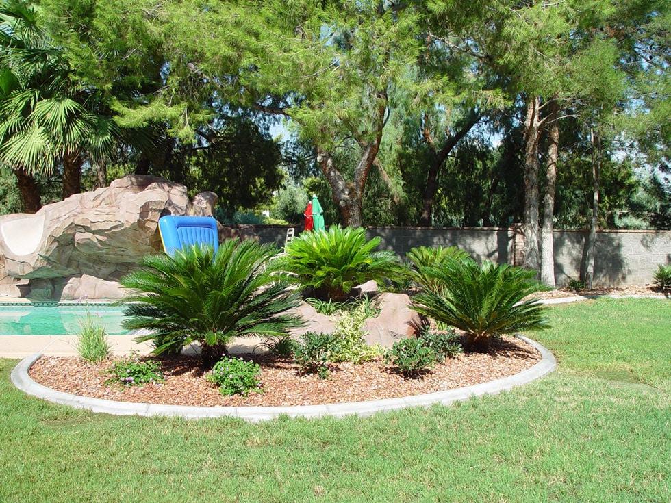 Palm Trees, Flagstone & Additional Tropical Feel · Cacti ... on Palm Tree Backyard Ideas id=98371