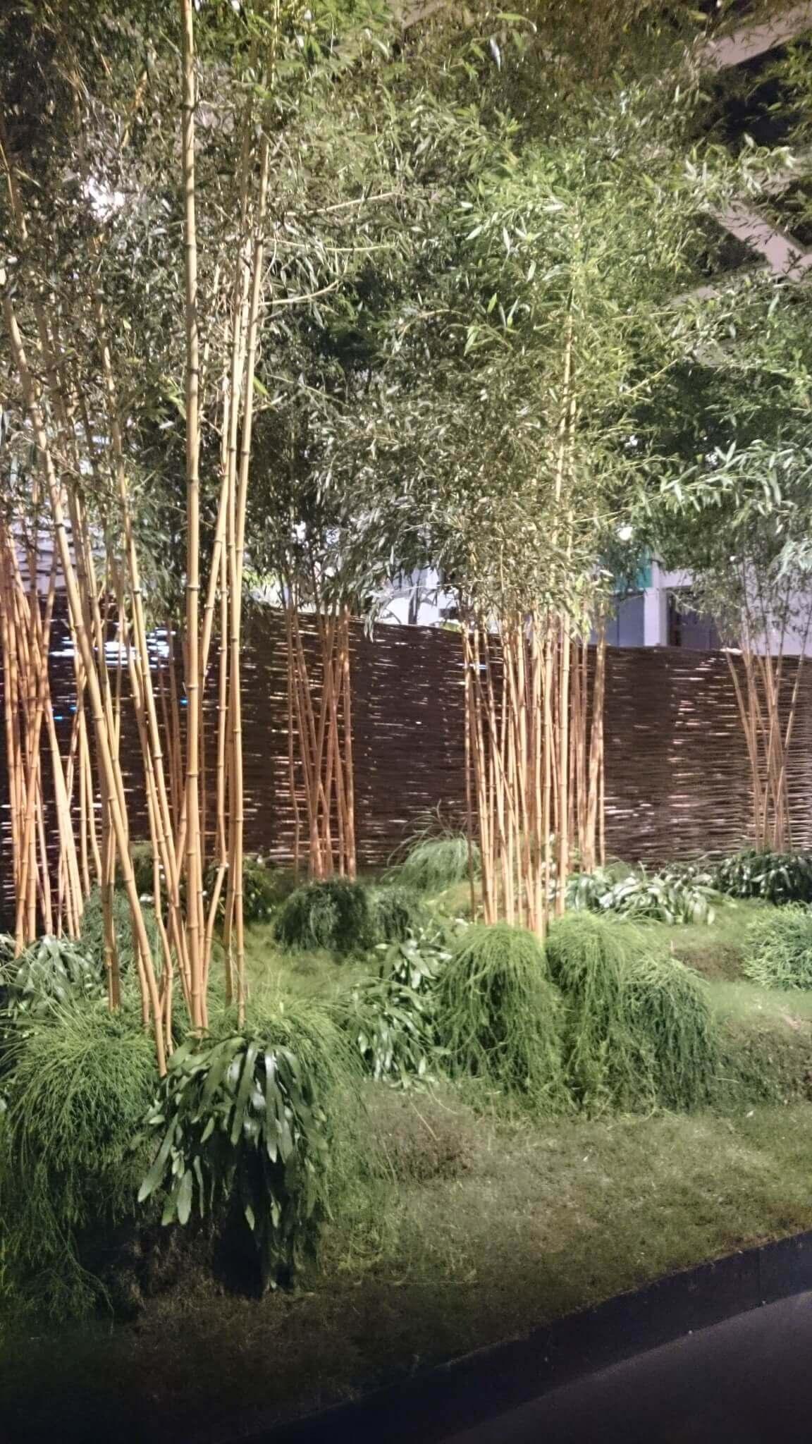 Rhipsalis Als Bodendecker Für Bambus   Eine Schöne Idee