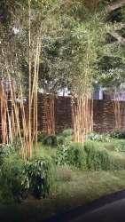 Rhipsalis als Bodendecker für Bambus - eine schöne Idee