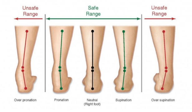 Pronation vs. Supination, Courtesy of Body Scientific