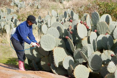web.-killing-cactus