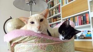 Adopción y acogida ¿gatito o gato?