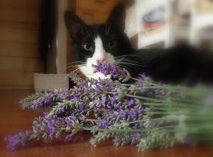 Terapias naturales de Cada gato en su casa