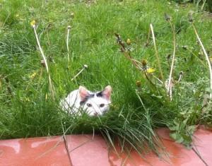gato caza