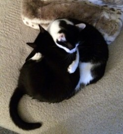 Luna y Kira