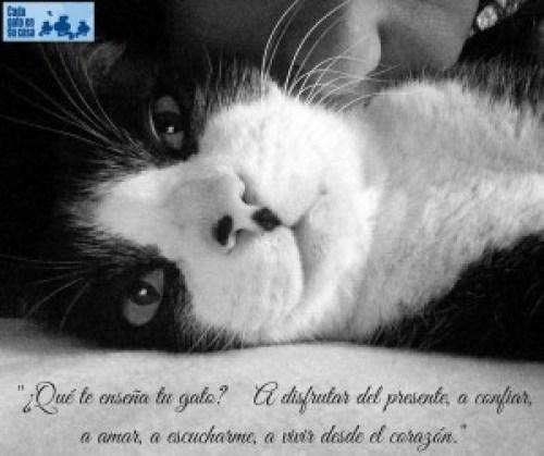 enseñanzas del gato