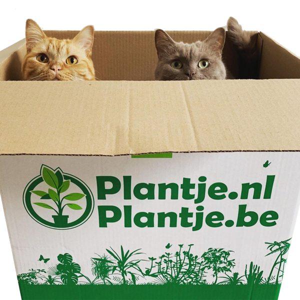 Katvriendelijke planten box (6 stuks)