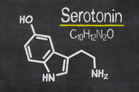 Happiness hormone seratonin