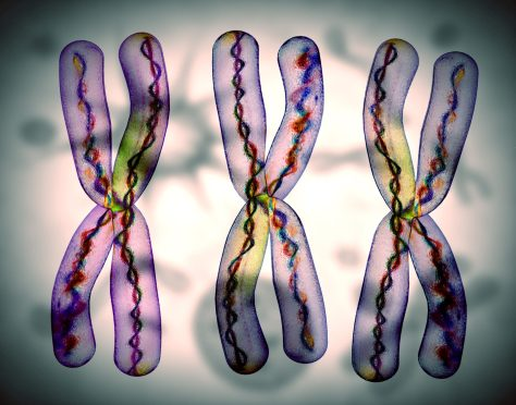 Chromosomes and Gender