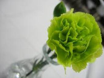 green carnation - historical gay symbol