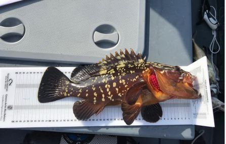 Peces: Interceptado un pescador furtivo en la Reserva de Es Freus