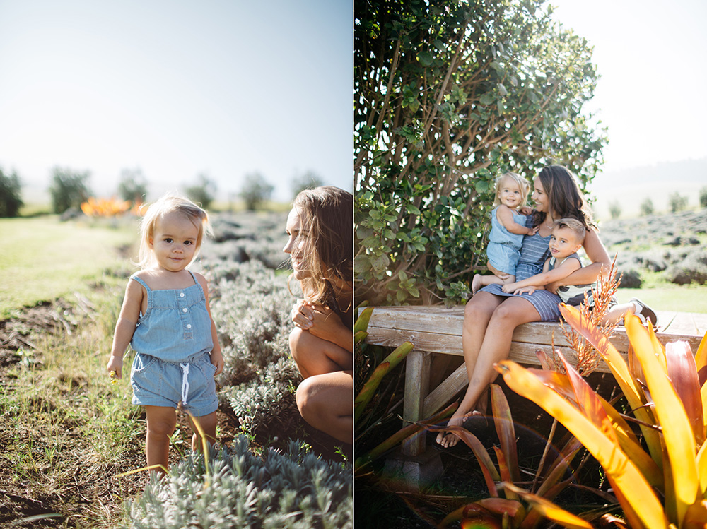 family portraits at the lavender farm on Maui by cadencia photography