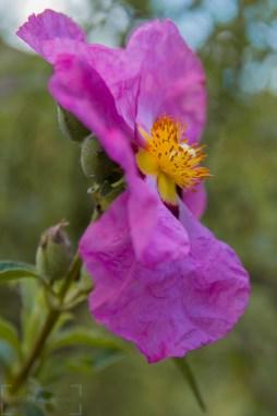 Flower image taken in June