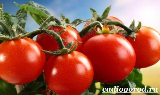 Как-сажать-помидоры-Когда-сажать-помидоры-3