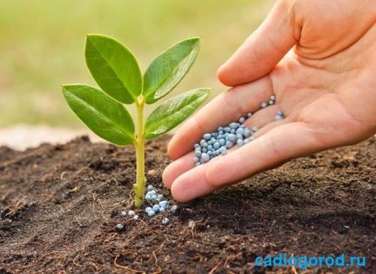 Удобрения-для-цветов-Виды-и-особенности-удобрений-для-цветов-3