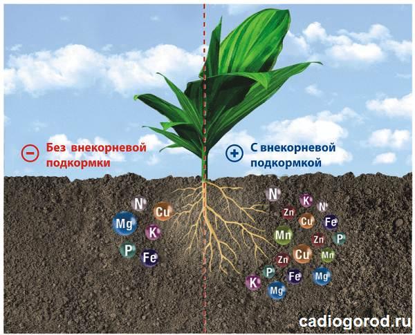 Удобрения-для-цветов-Виды-и-особенности-удобрений-для-цветов-5