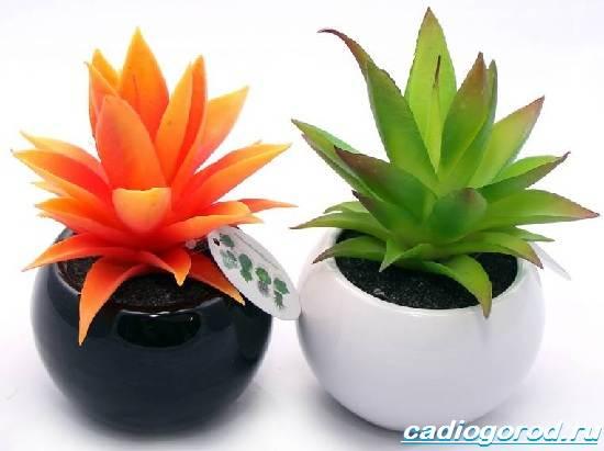 agava-rastenie-vyrashhivanie-agavy-uxod-za-agavoj-2