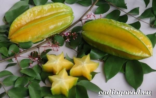 Карамбола-фрукт-Польза-карамболы-Как-выбрать-карамболу-Как-есть-карамболу-10
