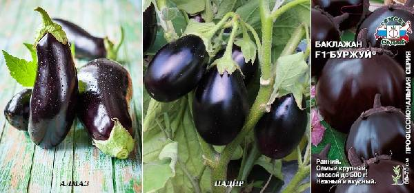 Выращивание-баклажанов-Как-и-когда-сажать-баклажаны-10